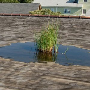 house inspections melbourne ponding roof water