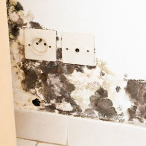 black mold | inspection report