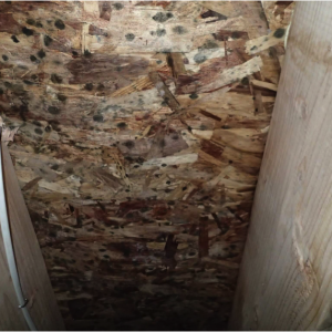 house inspection horrors subfloor mold
