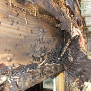 House inspections melbourne termite eating house