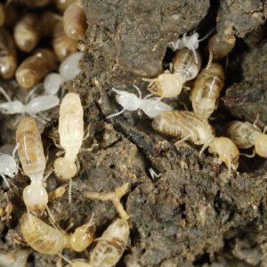 termites early warning signs